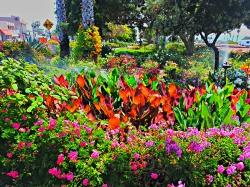 Carpentier Parkway, Cardiff California, Community Gardening
