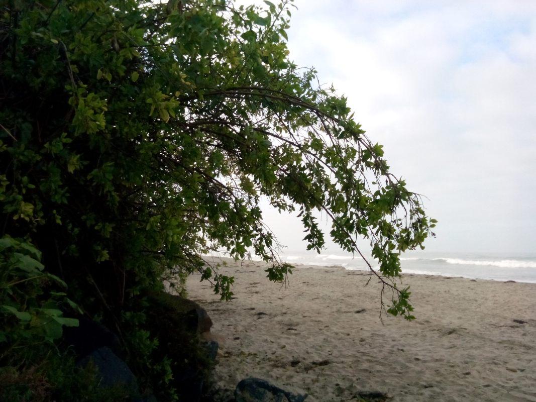 beach, trees, lush beaches