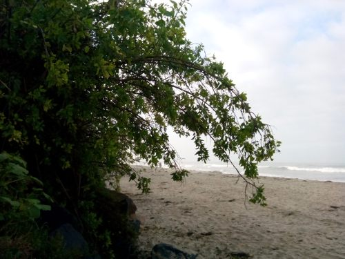 beach,  trees, lush beaches